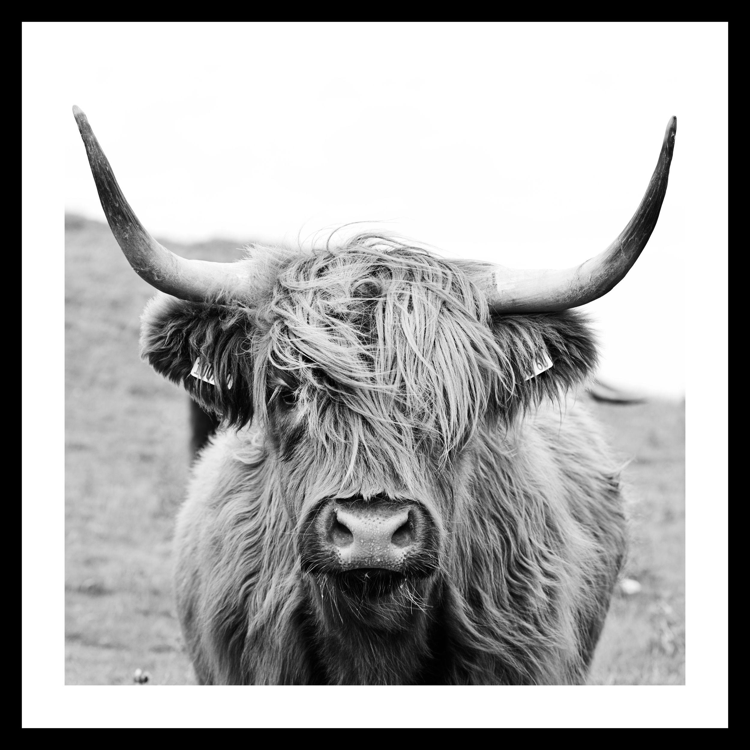 Druck gerahmt 35x35cm DANJA, COW